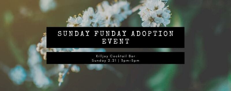 Sunday Funday Adoption Event at Killjoy with Cause for Paws