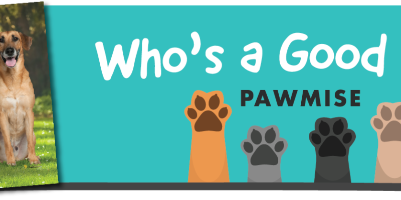 Who a Good Dog Town of Cary Contest